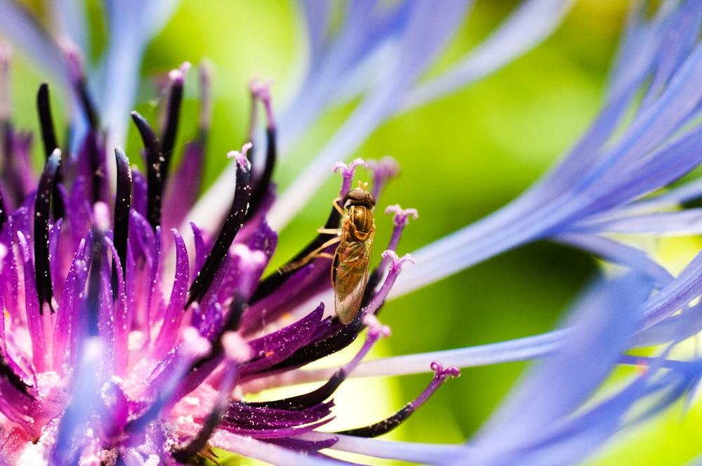 That Nasty Beautiful Bug