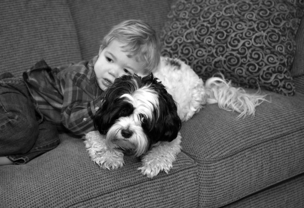 A Lesson in Empathy … from Dogs